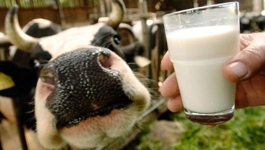 The Benefits Of Raw Milk